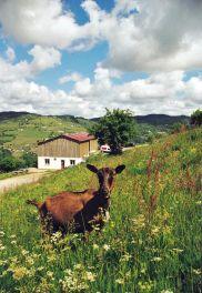 La chèvrerie du Brabant