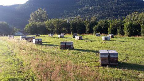 Le Rucher des Hautes-Vosges