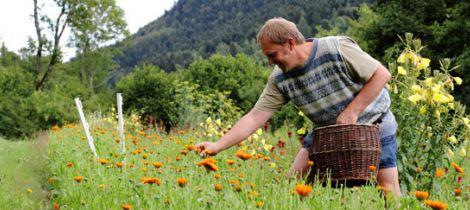Aperçu de LA FERME AUX HERBES - PLANTES AROMATIQUES ET MEDICINALES