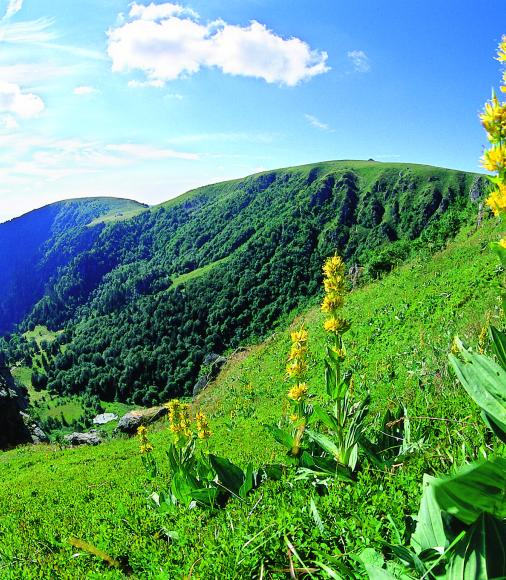Hautes Vosges et Gentiane