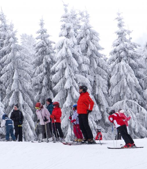 Skier au milieu des sapins