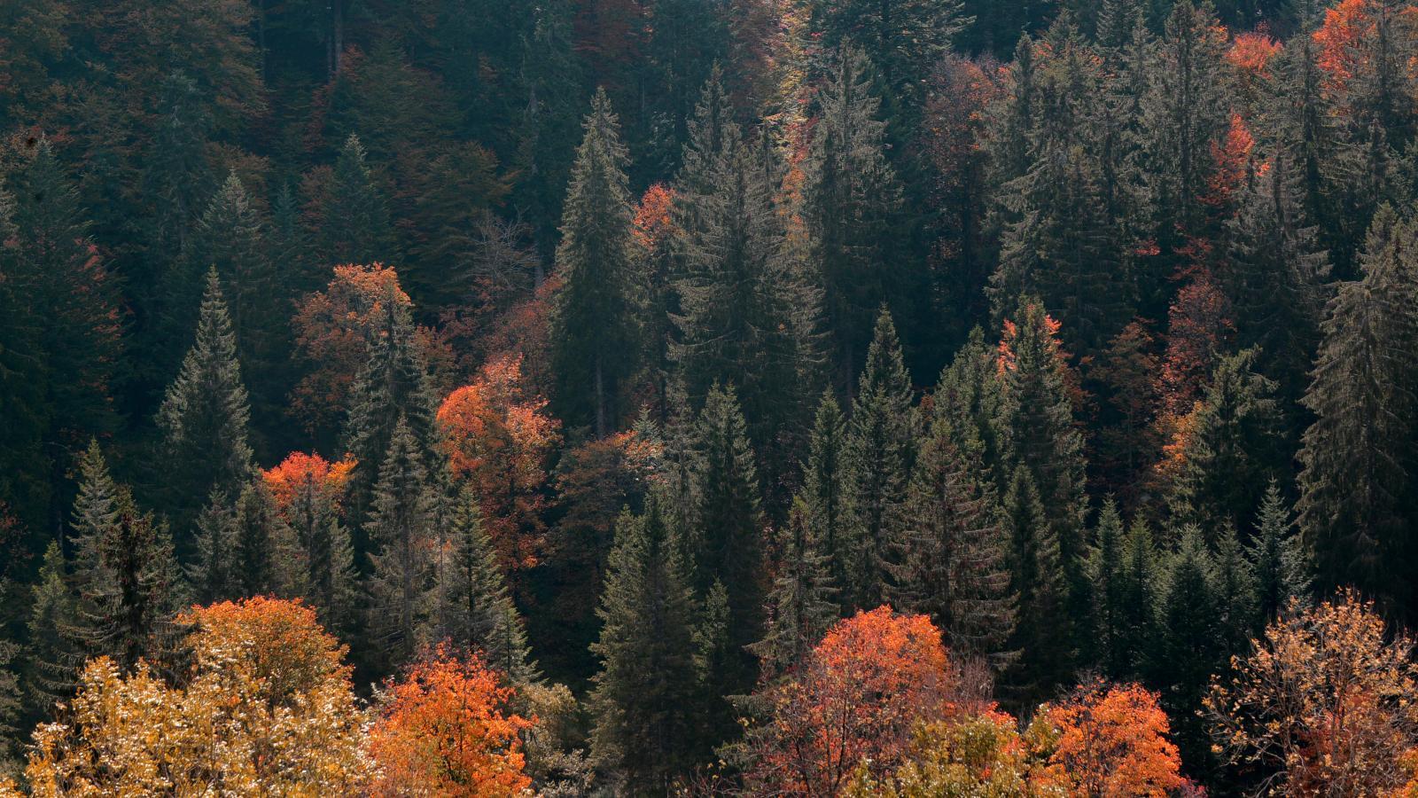 Les Zone Blanches / Forêt de gérardmer