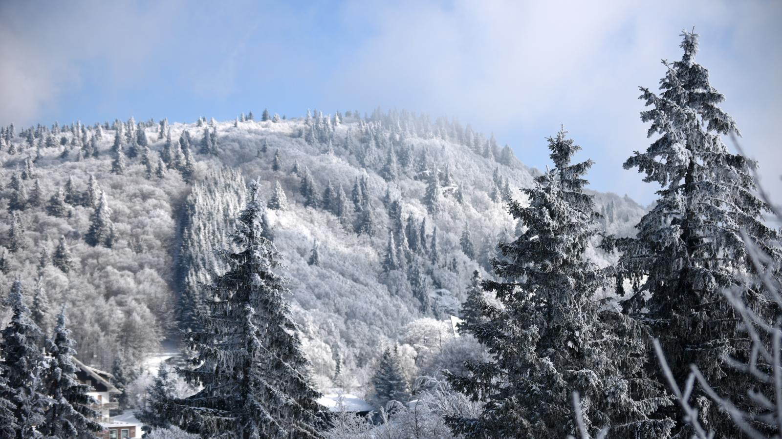 Paysage de Forêt dans la neige, Vosges ©CD88 JL